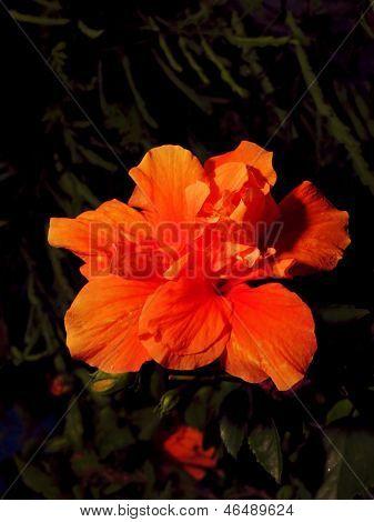 Orange Flower Vibrant