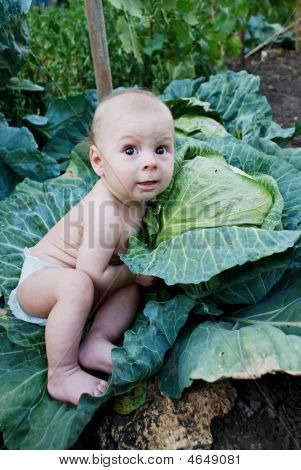 Little Boy Playing At The Vegetable Garden