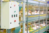 Demonstration of multilevel industrial incubator with soft toy chickens.