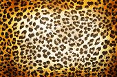 pic of camouflage  - Brown Cheetah pattern background or texture close up - JPG