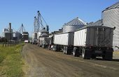 stock photo of truck farm  - Semi trucks line up to haul grain from the silos - JPG