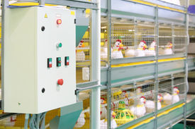 stock photo of hatcher  - Demonstration of multilevel industrial incubator with soft toy chickens - JPG