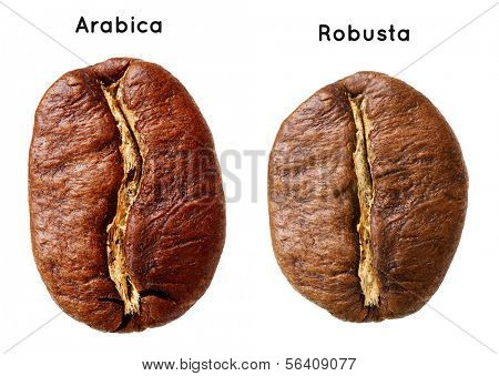 Black arabica, robusta coffee bean isolated on white background.
