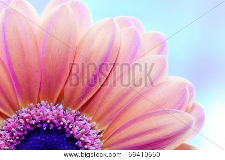 Flower close-up, sunlight from behind. Fresh, spring background