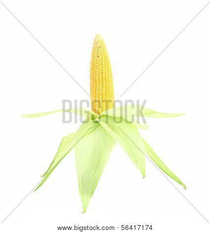 Fresh raw corncob