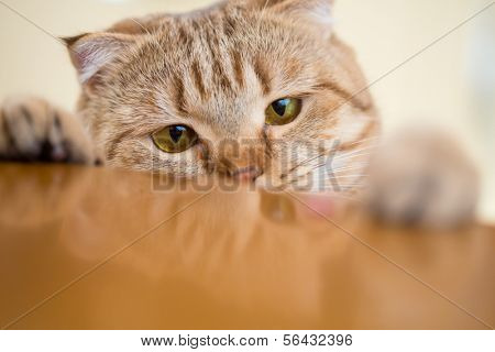 Cat trying to steal something from kitchen table