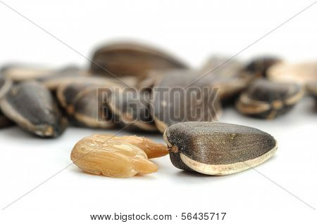 Extreme close-up image of sunflower seeds