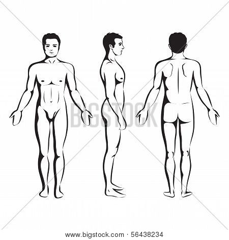 man body anatomy