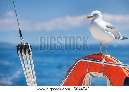Seagull standing on orange lifebelt against blue sky.