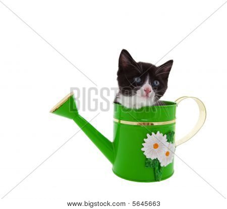 Watering Can Kitty