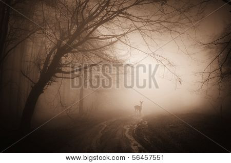 Forest with deer standing in the fog