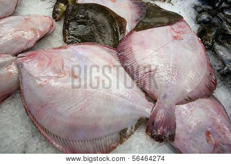Fresh Raw Flatfishes
