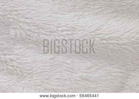 Fur background