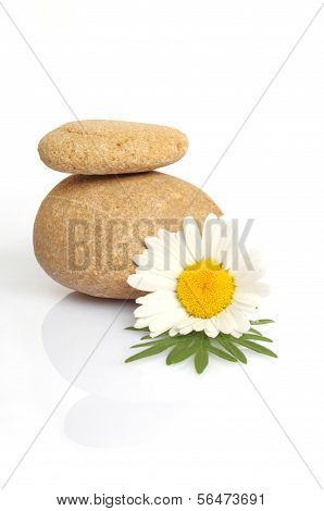 Set Of Flowers On Stone