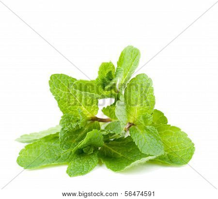 Mint Leafs Close Up On A White Background