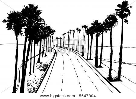 Palm Tree Street