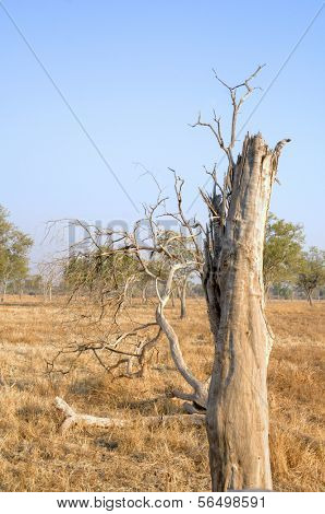 Landscape in South Luangwa National Park, Zambia, Africa