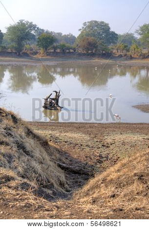 Landscape with flamingos in South Luangwa National Park, Zambia, Africa