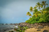 stock photo of windswept  - Wild Windswept Deserted Tropical Beach North Shore Oahu Hawaii - JPG