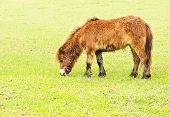stock photo of headstrong  - Donkey in a Green Field in Thailand - JPG