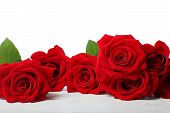 pic of rosa  - Beautiful red roses on white wooden table - JPG