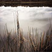 stock photo of boggy  - Reflections and plants in pond - JPG