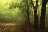 image of vegetation  - Green forest with fog and trees in summer - JPG