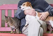 stock photo of cuddle  - Man cuddling dog and cat sitting next to them on bench