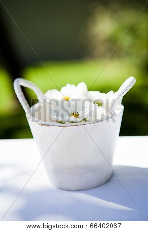 White Daisy Flowers In Bucket