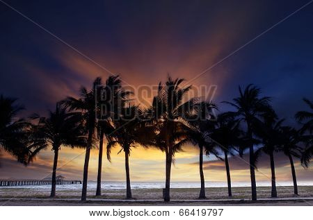 Beautiful  Twilight Sky And Dusky With Silhouete Coconut Tree On Sand Beach Use For Nature Backgroun