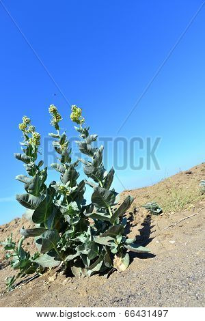 Flower Thriving in Dry Conditions
