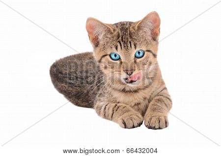 Brown Tabby Kitten With Tongue Out