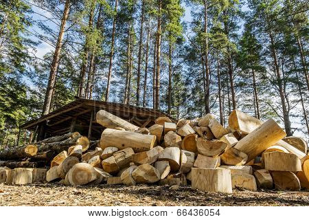 A Pile Of Logs Near A Wooden House In The Forest