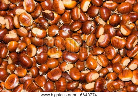 Harvesting Of Chestnuts