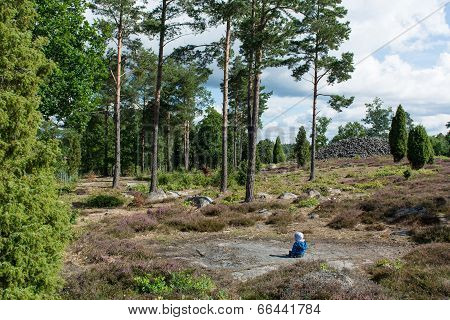 Baby Sitting In A Swedish Forest