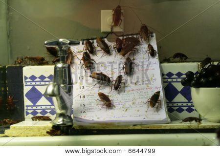 Cocina infestados de cucarachas