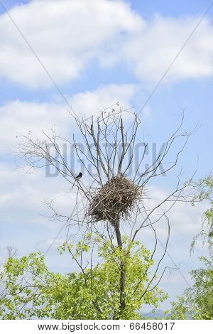 magpie nest on a tree in sunny day