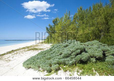 Silver Point Beach