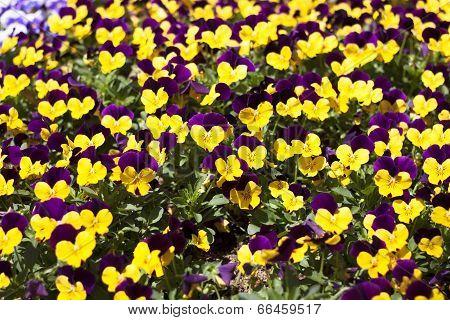 Flower Bed Bloom In The Garden.