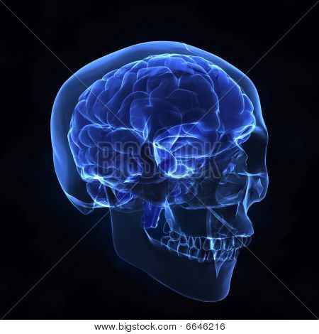 Left Front View Of Human Brain