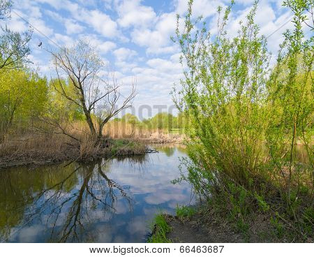 Spring Waterscape