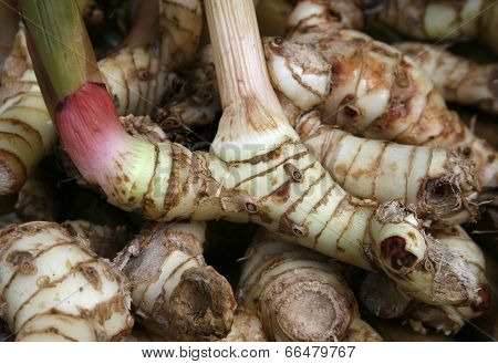 Pink Rhizome Of Galangal