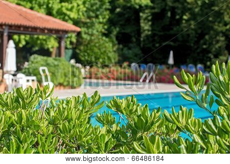 Relaxation Zone With Greenery And Swimming Pool