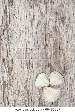 Seashells On The Old Rude Wood