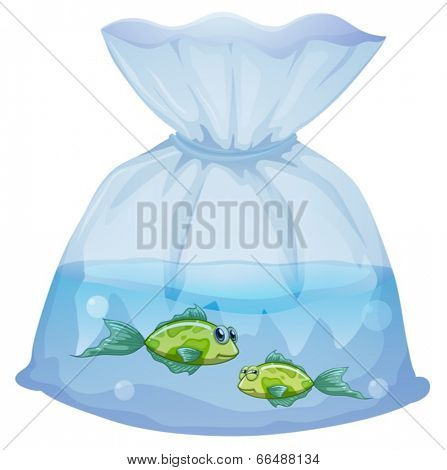 Illustration of the green fishes inside the plastic pouch on a white background