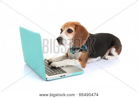 business concept smart pet dog using laptop computer