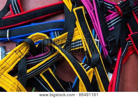 Colored Dog Harnesses