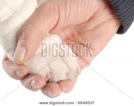 Hand Holding Dog Paw