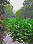stock photo of humble  - Photo of the Humble Administrator Garden in Suzhou near Shanghai with pond full of water lilies and the silhouette of ruigang pagoda in background China stylized and filtered to resemble an oil painting - JPG