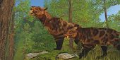 pic of saber tooth tiger  - Two Saber - JPG